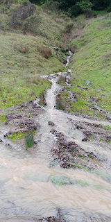 Walker Creek flows into Tomales Bay