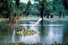 Henderson swamp tour3.jpg