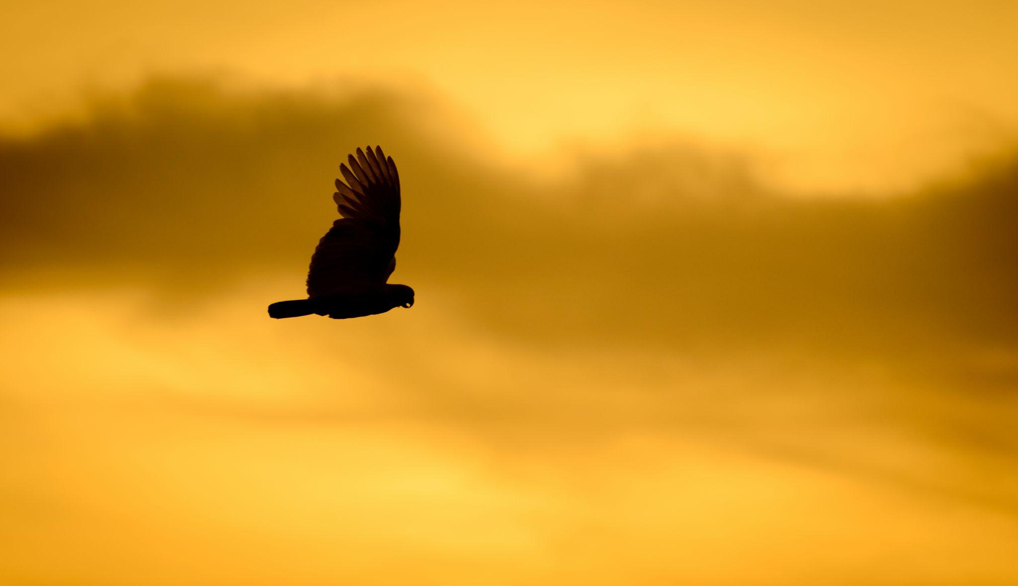 Dawn Freedom