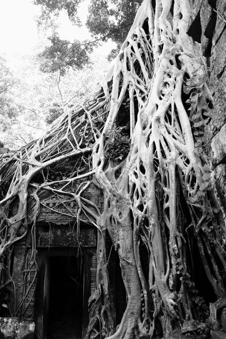 Day 1: Ta Prohm Temple