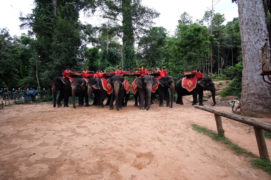 Day 1: Elephants at Phnom Bakheng