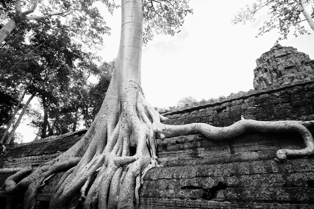 Day 3: Ta Prohm Temple