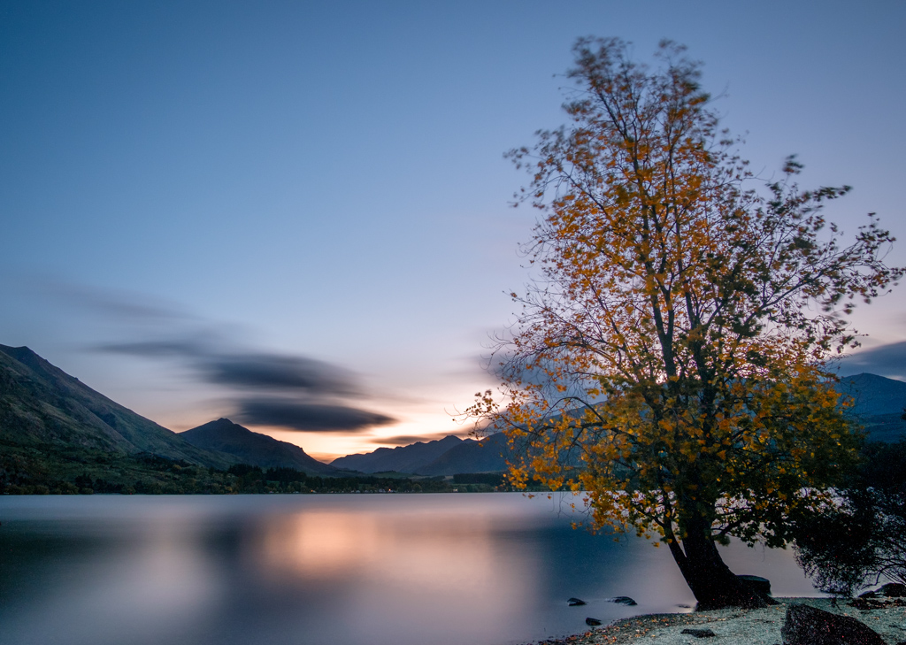 Long exposure of a moving tree, Glendhu Bay