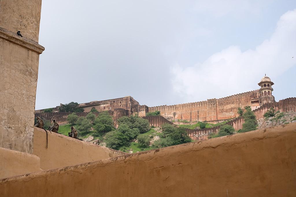 Monkeys and Jaigarh Fort