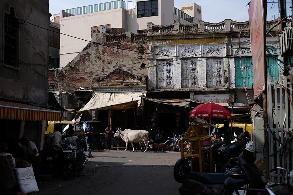 Always a cow, Subhash Bazaar