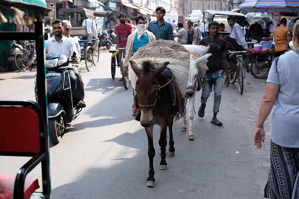 Donkey's hauling, Subhash Bazaar