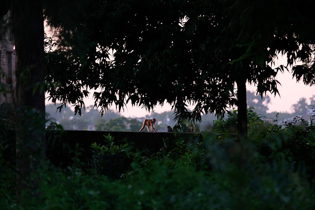 Monkey in the Garden