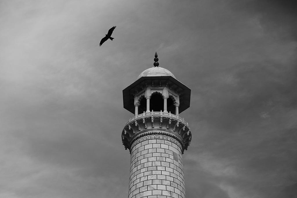 A Black Kite and a minaret