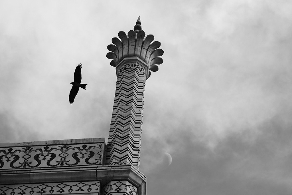 A Black Kite circles the spire