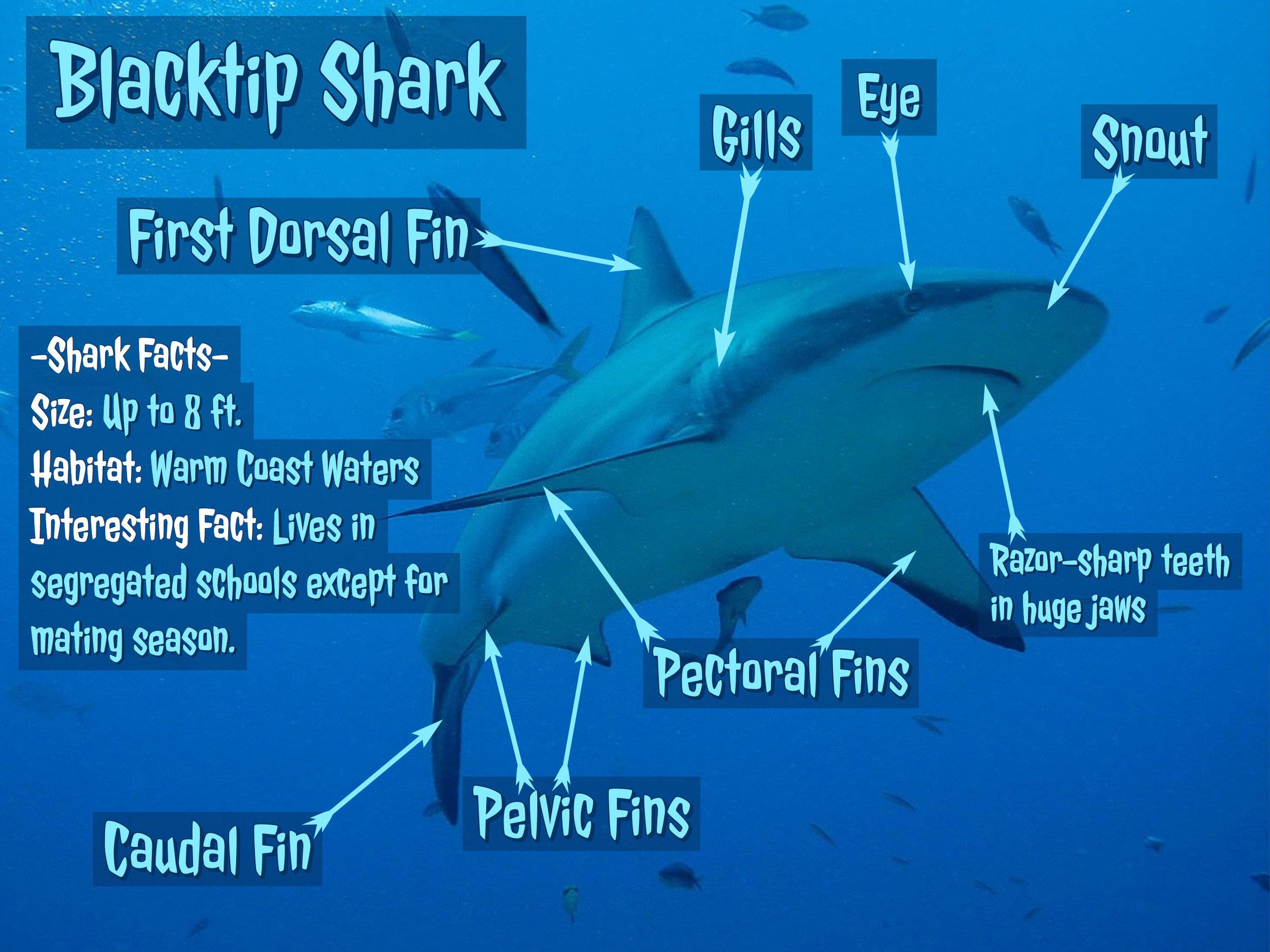 Adobe Spark Post Shark Diagram.jpg