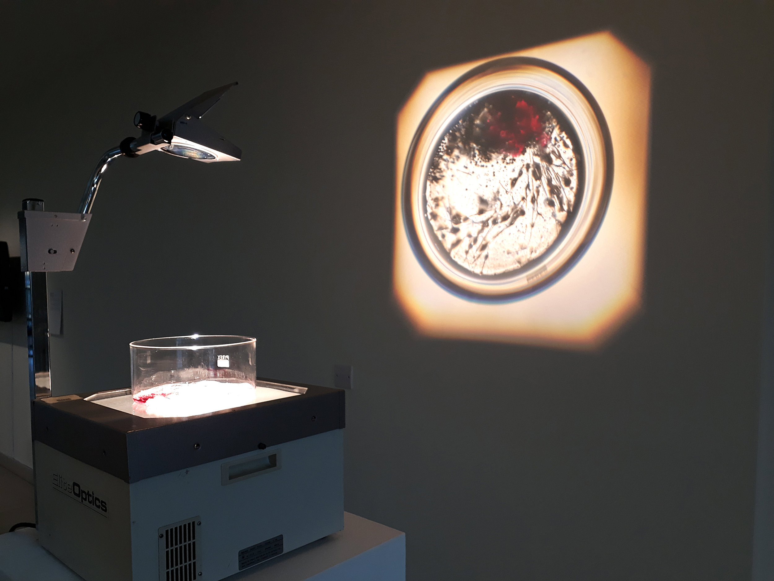 'dermo fibroblast, in vitro', 2018 installation by Charlie Murphy at Dundee's Lifespace gallery Mixed media, OHP
