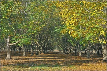 """Along with his faith and interfaith interests, Greg has wonderful photographic collections of the natural world. This picture is titled """"Into the Orchard."""""""