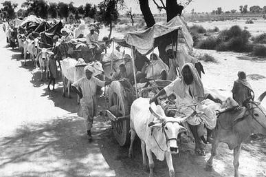 Rural Sikhs in a long oxcart train headed towards India in 1947. – Photograph:      Wikipedia