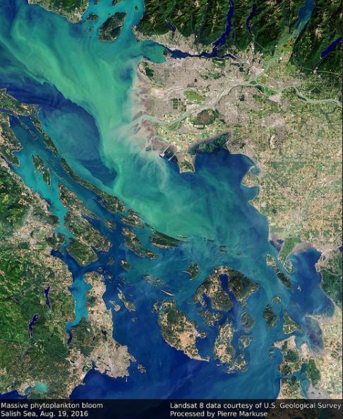 Phytoplankton bloom in the Salish Sea – Photo:    Pierre Markuse, C.c. 2.0