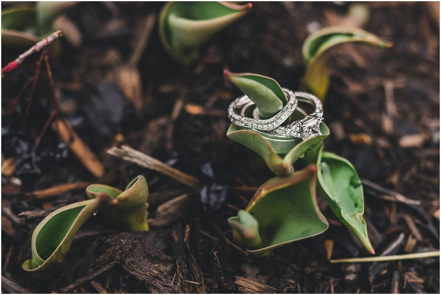 Buffalo Wedding Rings Photographer