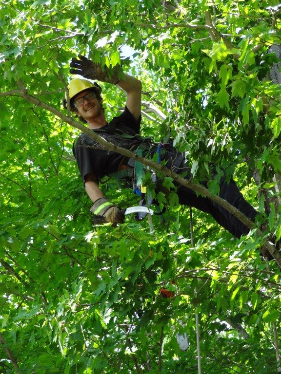 Pruning - Using our formal education in arboriculture and urban forestry, we have developed a process when it comes to pruning. Our crew is equipped with the proper skills, tools, and knowledge to do a thorough and complete job.For each property, we do our best to assess and eliminate all potential hazards.It is important to monitor your trees' limbs for splits, cracks, cavities, and overall health on a regular basis. If you are concerned or uncertain about your trees, give us a call!