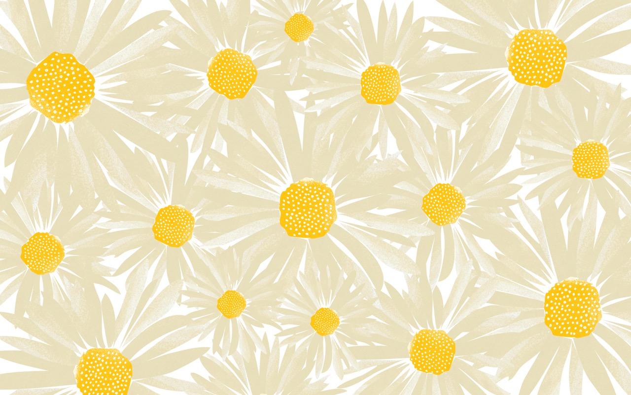CWILP__daisies-01.jpeg