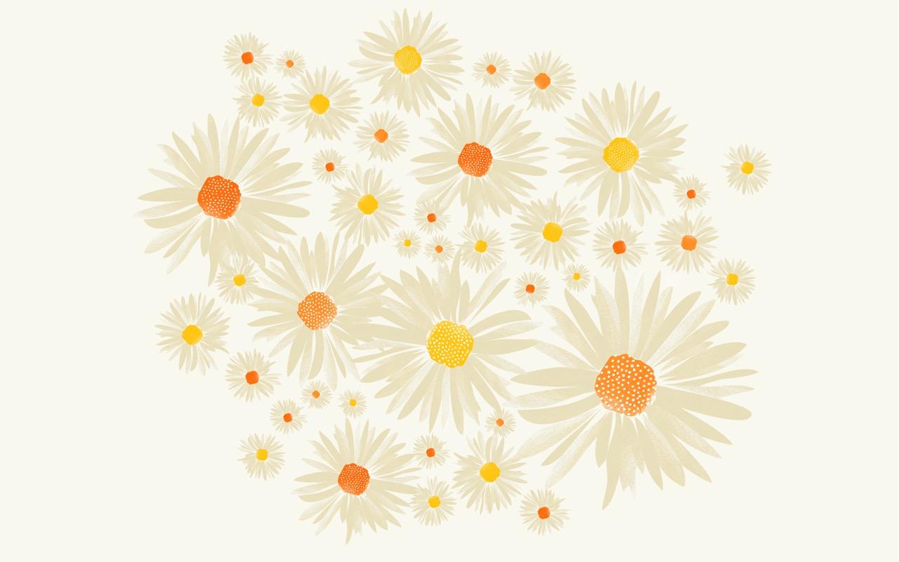 CWILP__daisies-02.jpeg
