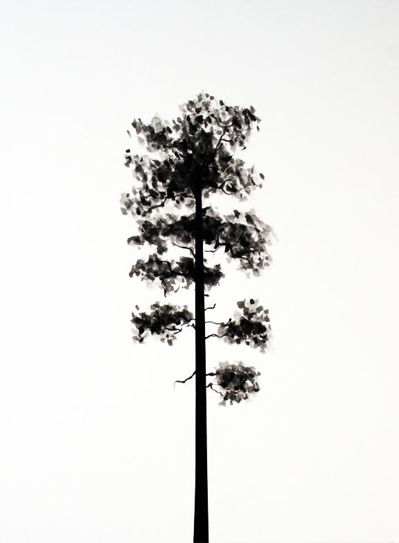Yellow Pine.jpg