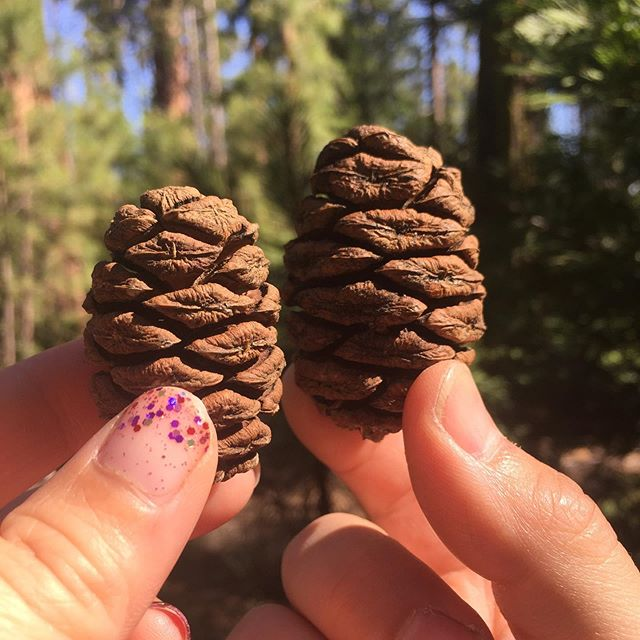 Ryan and I are pictured here holding Sequoia tree cones. Did you know that this little cone filled with seeds turns into a giant living towering tree? That's right! And a long long time ago two Sequoia Seeds took up residence right next to each other and GREW TOGETHER. They are now intertwined with each other and still thriving 2,000 years later. They are called the FAITHFUL COUPLE.  And that's how we want to be—- choosing to take root next to each other, reaching for air and sun (Jesus) together, and holding one another up.  We just marked our 10 year wedding anniversary and here's to many more.  My grandparents were married 58 years, Ryan's parents for 50 and counting, and my parents for 35 and counting this year. What incredible examples we have!  You too? What things keep you and your spouse growing together?  #10yearsofmarriage #theancientcouple #yosemite