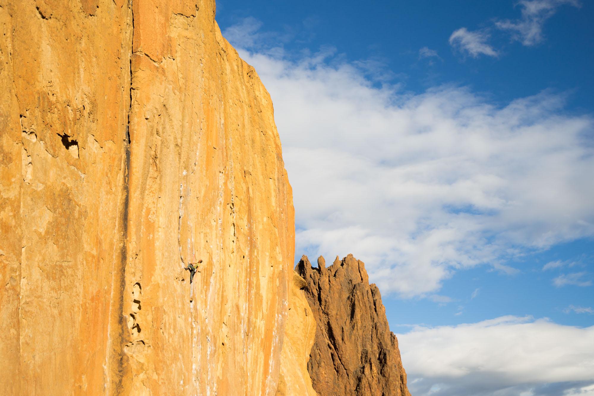 Climbing Morning Glory Wall