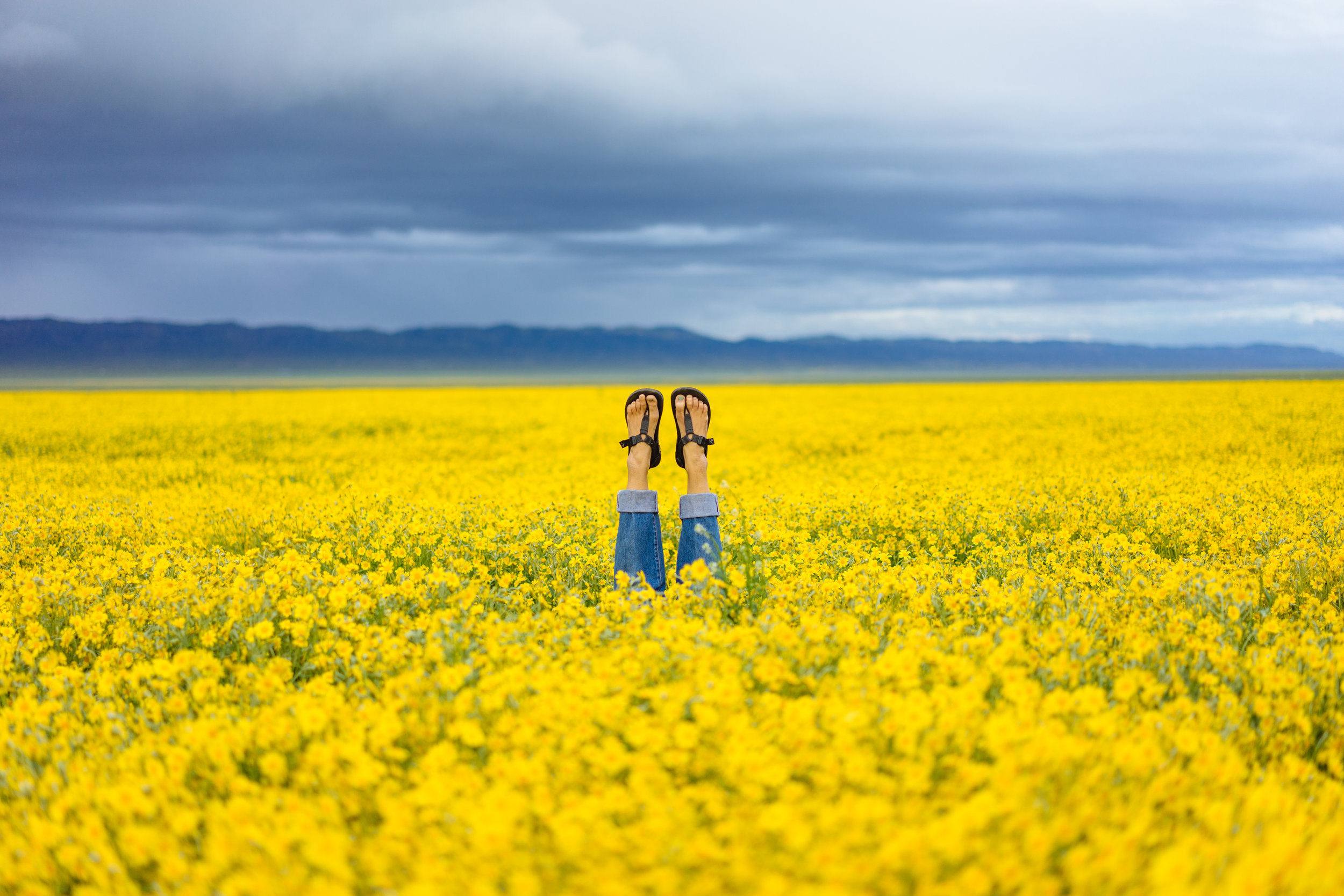 This might be one of our favorite pictures that we have taken all year! Super Bloom at Carizzo Plains, CA