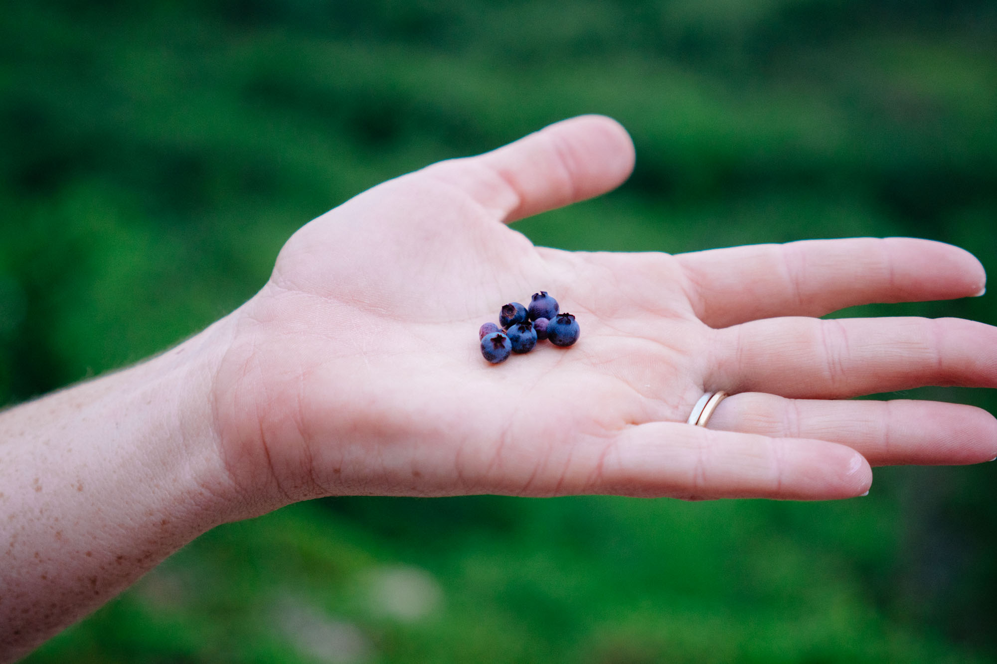 Trail snacks: Wild Blueberries were all over the trail. I ate so many that I got a cramp