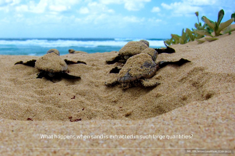 Coda14-Turtles1500-IMG_2218-jeroenlooye-flickr-ccbysa2.0.jpg