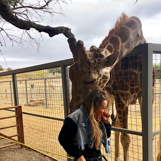 Welp today... my dreams I didn't even know I had came true.🤷🏼‍♀️🤣 I got nuzzled by a giraffe @a_giraffe_named_stanley 🙏🏻🦒 ⠀⠀⠀⠀⠀⠀⠀⠀ & drank wine on a Jeep safari with 3 of my besties. 🙏🏻 ⠀⠀⠀⠀⠀⠀⠀⠀⠀ 10/10 recommend @malibusafari legit dying over how much fun that was 💕 ⠀⠀⠀⠀⠀⠀⠀⠀ #malibusafari #malibu