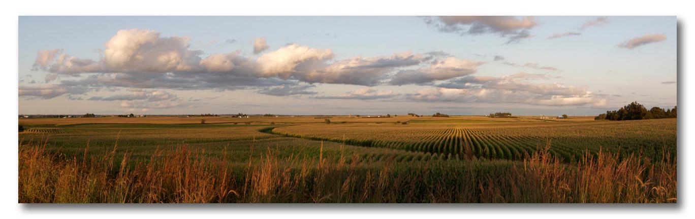 Sunset Harvest Corn