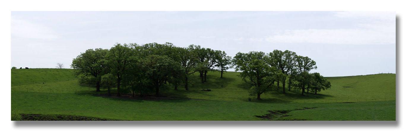 Farm Tree Cluster