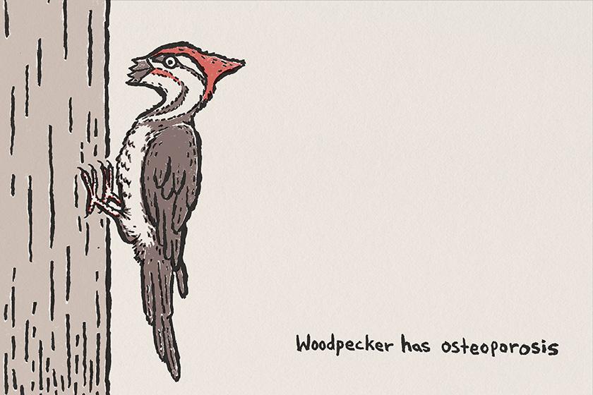 woodpeck.jpg