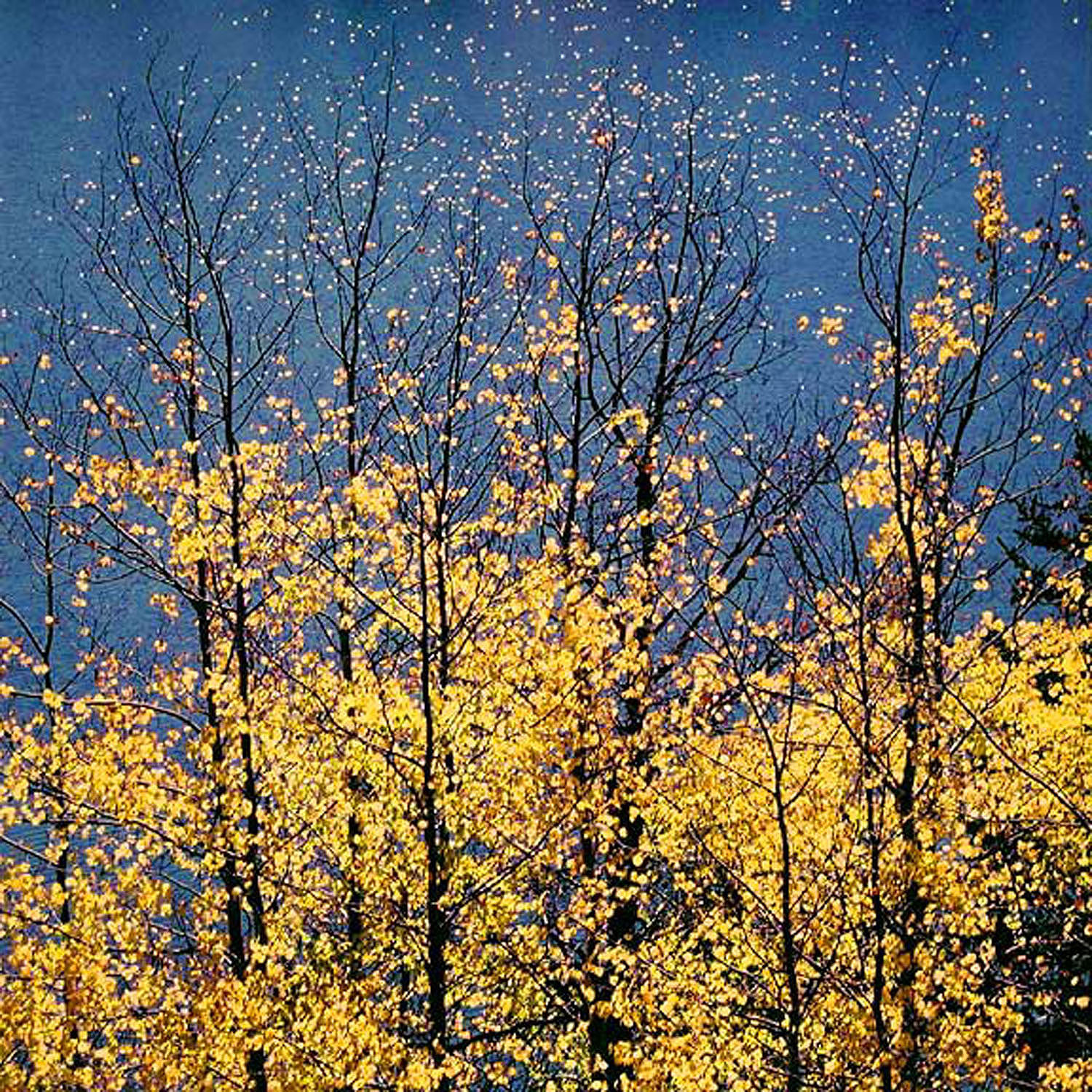 """Christopher Burkett """"Autumn Aspens & Blue Lake Stars,"""" Wyoming     Cibachrome Photograph     Available in 20"""" x 20"""", 30"""" x 30"""", and 40"""" x 40"""""""