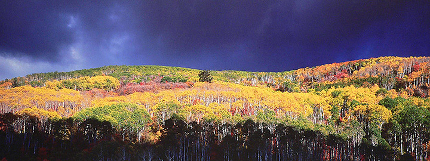 """Christopher Burkett """"Autumn Tempest,"""" Utah     Cibachrome Photograph     Available in   13"""" x 33"""", 20"""" x 50"""", and 26"""" x 64"""""""