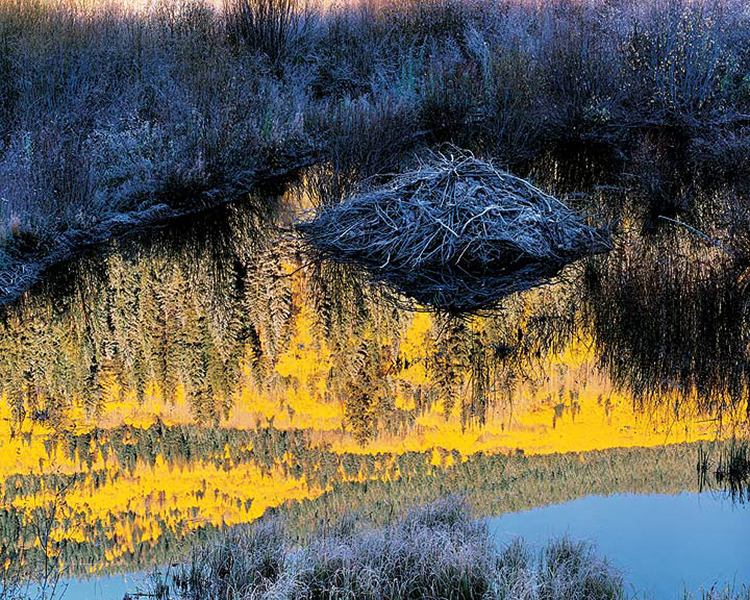 """Christopher Burkett """"Beaver Lodge at Sunrise,"""" Colorado     Cibachrome Photograph     Available in 20"""" x 24"""", 30"""" x 40"""", and 40"""" x 50"""""""