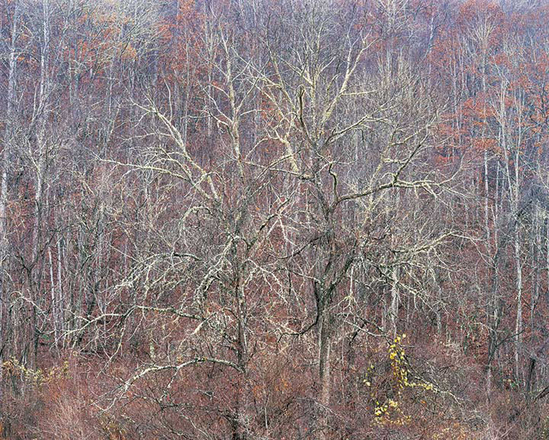 "Christopher Burkett ""Black Walnut Trees and Rain,"" North Carolina     Cibachrome Photograph     Available in 20"" x 24"", 30"" x 40"", and 40"" x 50"""