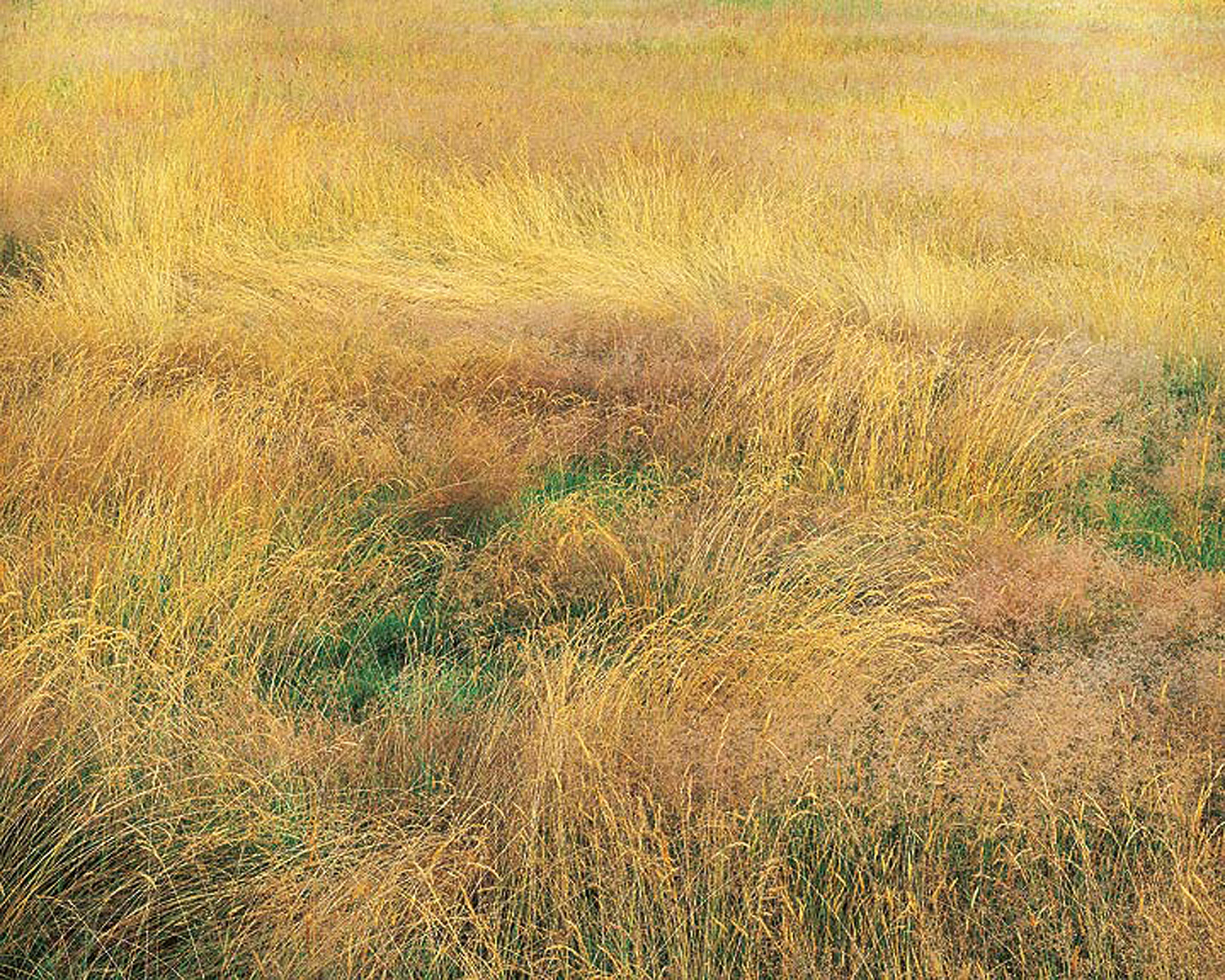 """Christopher Burkett """"Blooming Grasses,"""" Connecticut     Cibachrome Photograph     Available in 20"""" x 24"""", 30"""" x 40"""", and 40"""" x 50"""""""