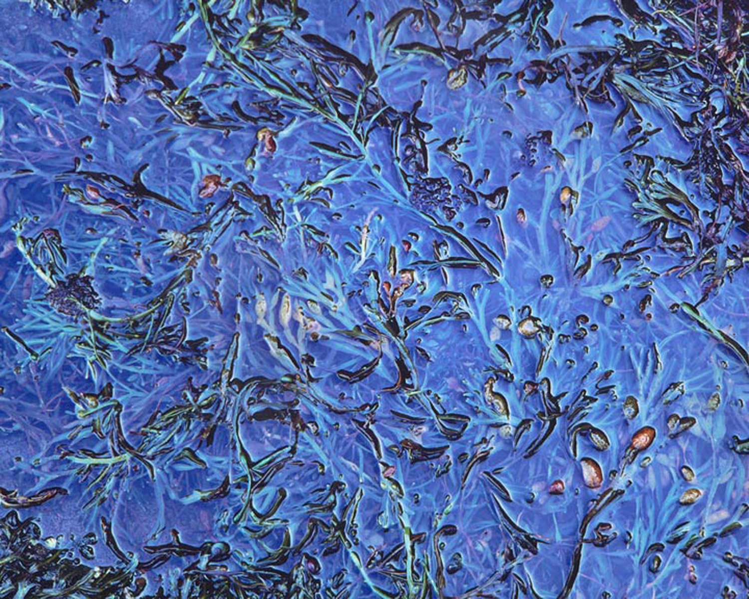 """Christopher Burkett """"Blue Melange,"""" Maine     Cibachrome Photograph     Available in 20"""" x 24"""", 30"""" x 40"""", and 40"""" x 50"""""""