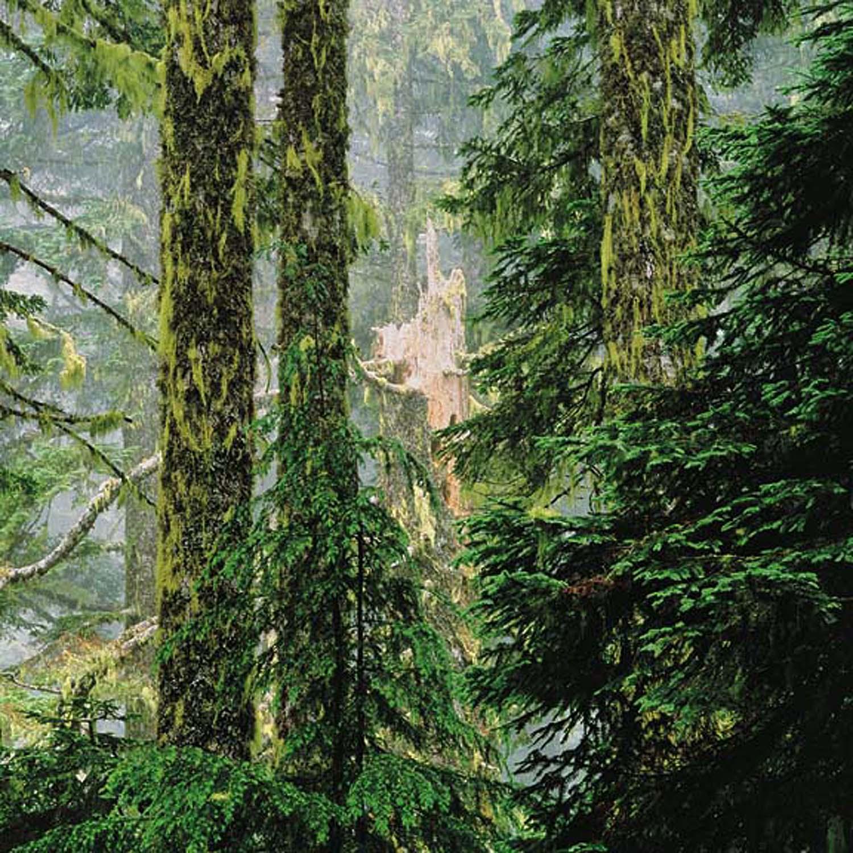"Christopher Burkett ""Broken Fir Forest,"" Oregon     Cibachrome Photograph     Available in 20"" x 20"", 30"" x 30"", and 40"" x 40"""