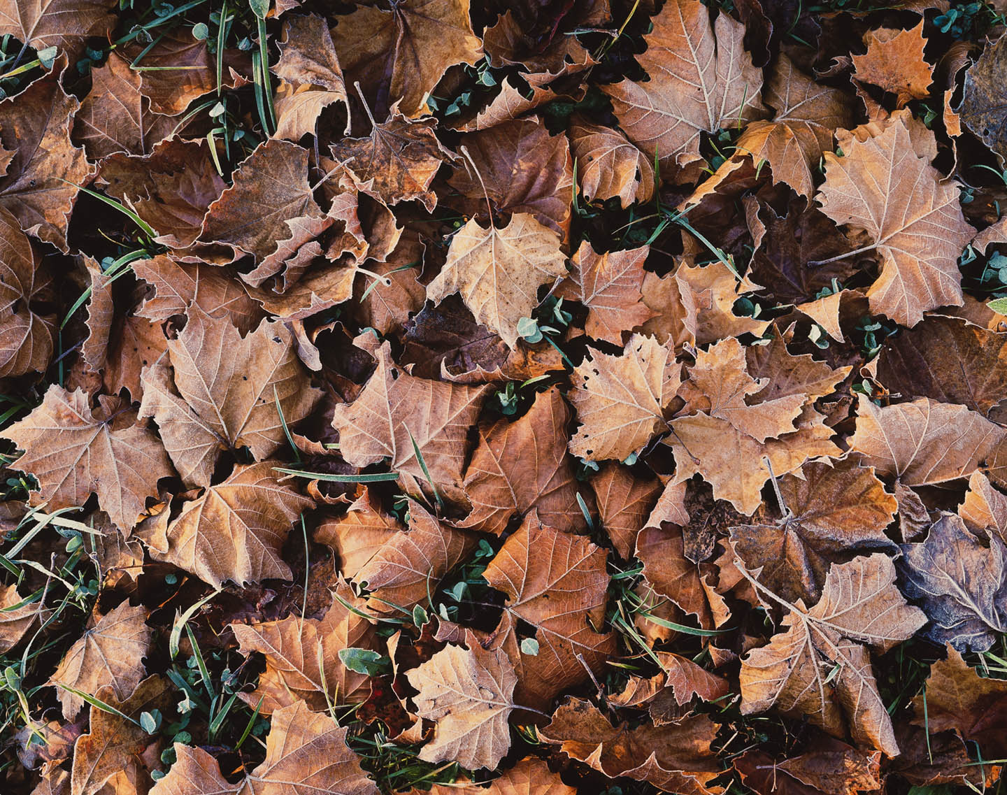 """Christopher Burkett """"Brown Leaves and Frost,"""" North Carolina     Cibachrome Photograph     Available in 20"""" x 24"""", 30"""" x 40"""", and 40"""" x 50"""""""