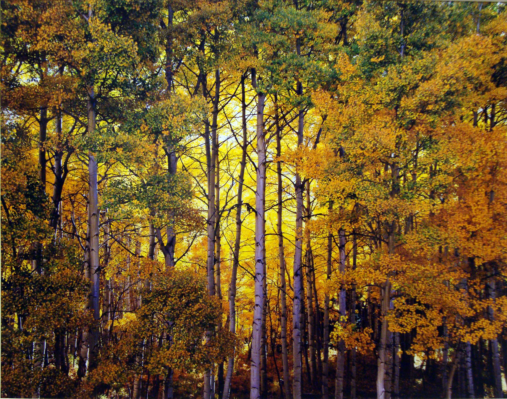 "Christopher Burkett ""Forest Light,"" Colorado  Cibachrome Photograph  Available in 20"" x 24"", 30"" x 40"", and 40"" x 50"""