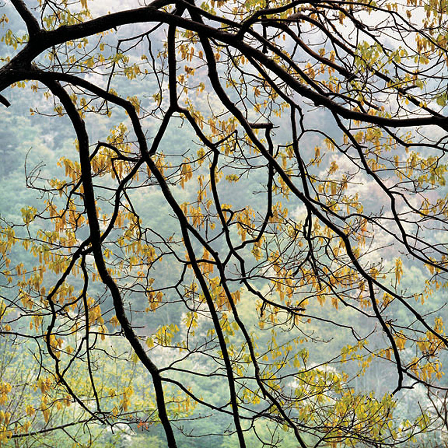"""Christopher Burkett   """"Cascading Maple and Rain,"""" West Virginia    Cibachrome Photograph    Available in 20"""" x 20"""", 30"""" x 30"""", and 40"""" x 40"""""""