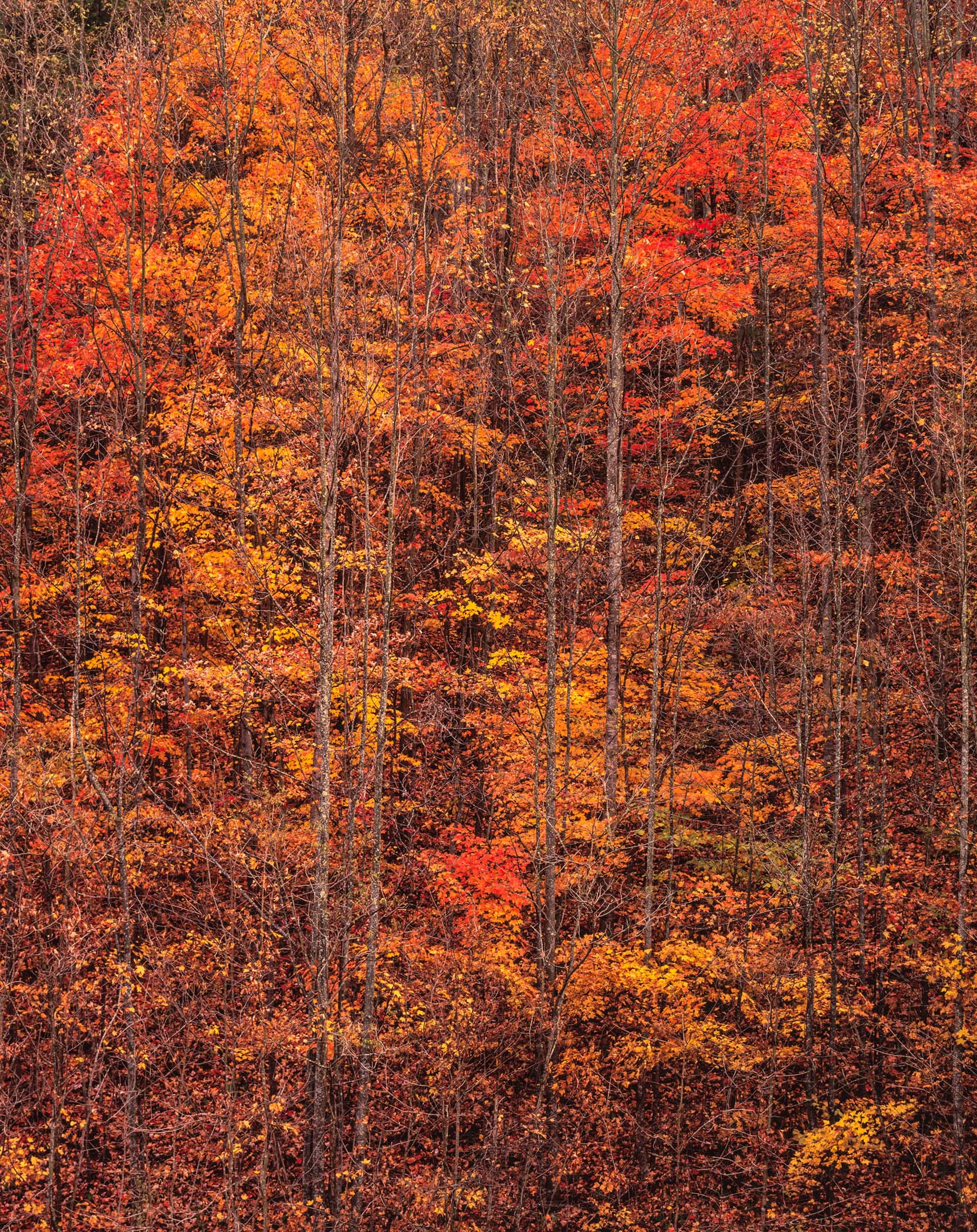 """Christopher Burkett   """"Autumn Forest Sunrise,""""West Virginia    Cibachrome Photograph     Available in 24"""" x 20"""", 40"""" x 30"""", and 50"""" x 40"""""""
