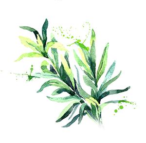 Pure Wild Green: Yoga Paleo Lifestyle