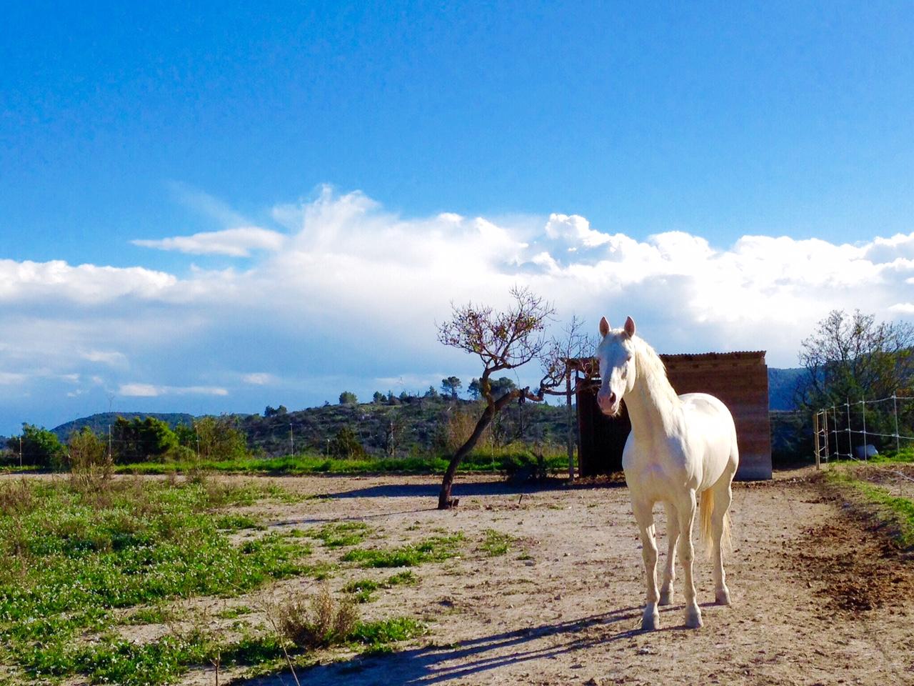 Ibiza horse riding.jpg