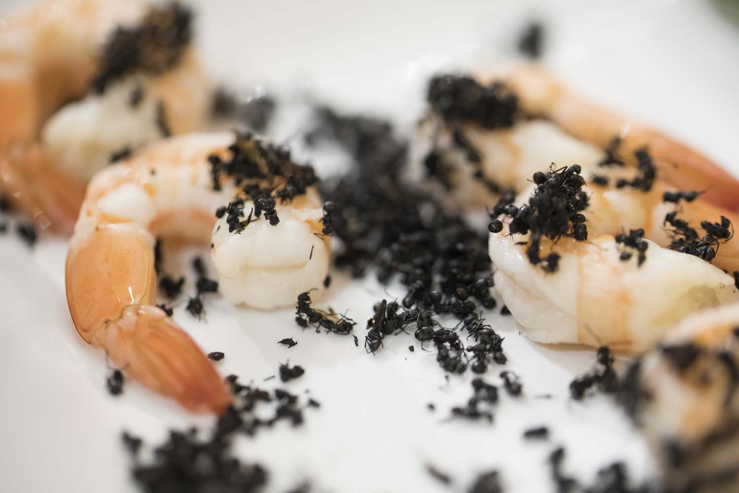 Edible Ants on Shrimp