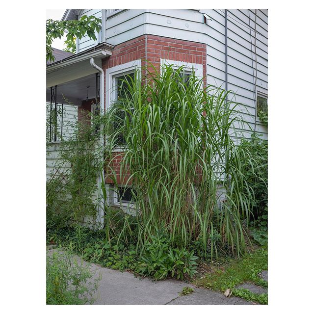 Grasses, Ithaca, New York, 2019