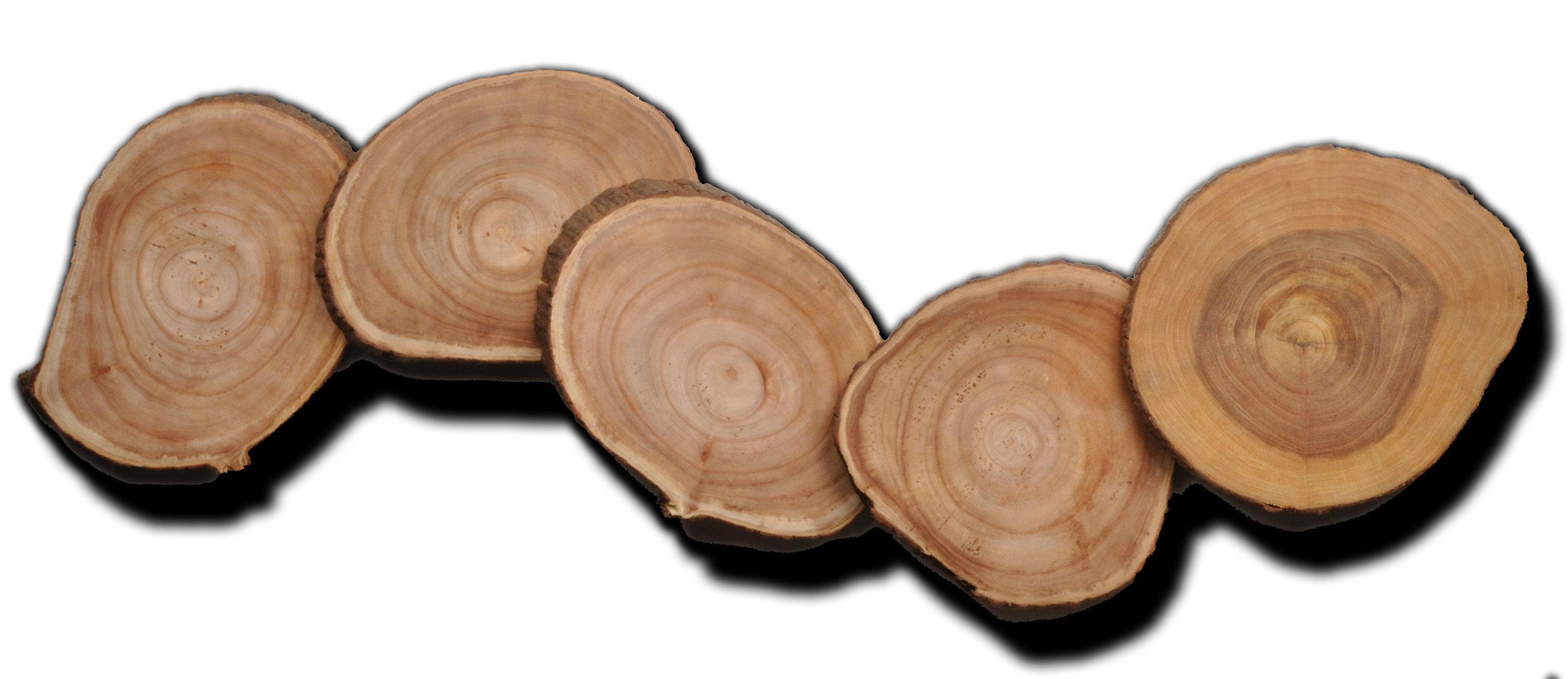 TreeTrunkSlices.JPG