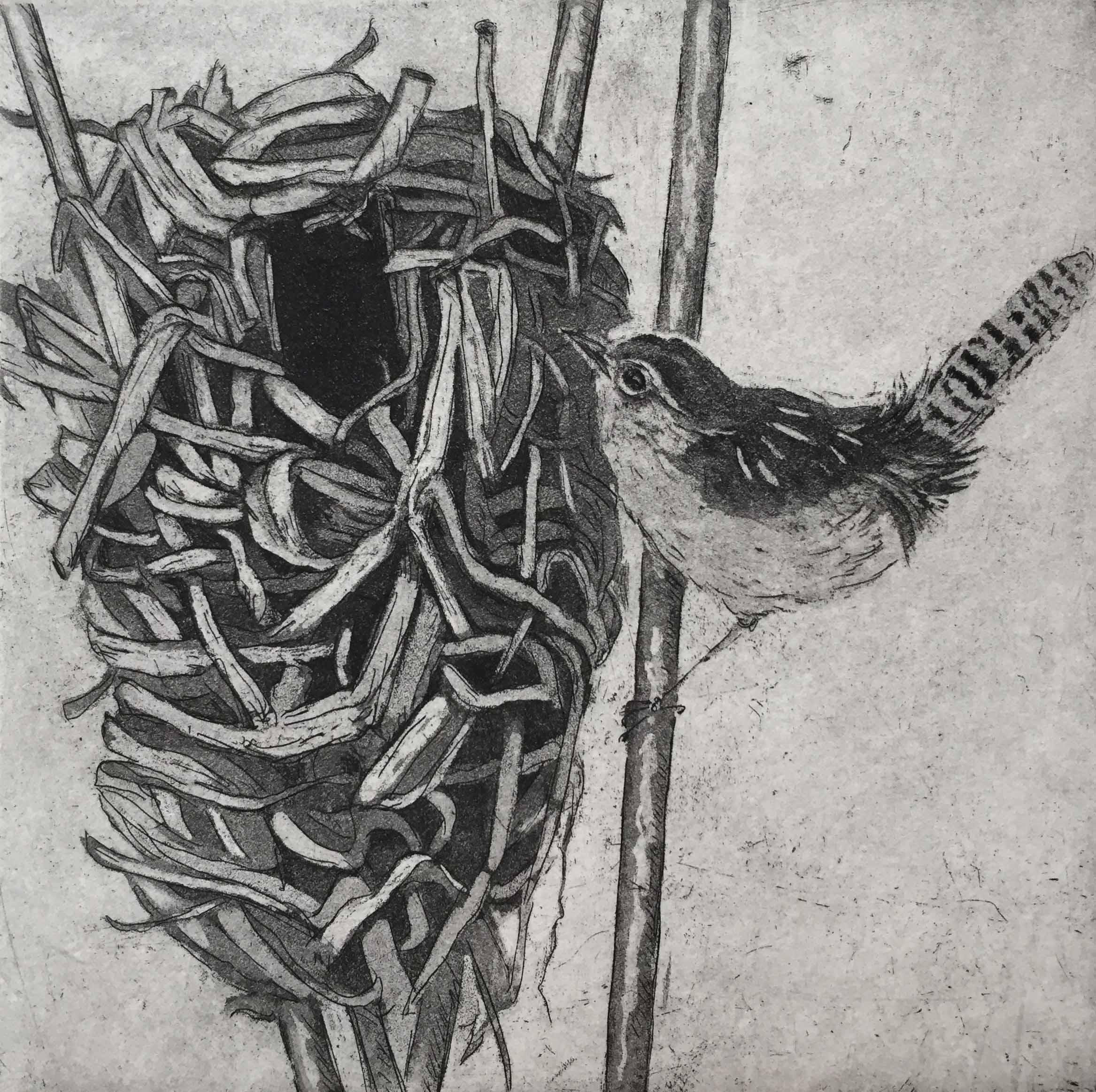 Marsh Wren Nest