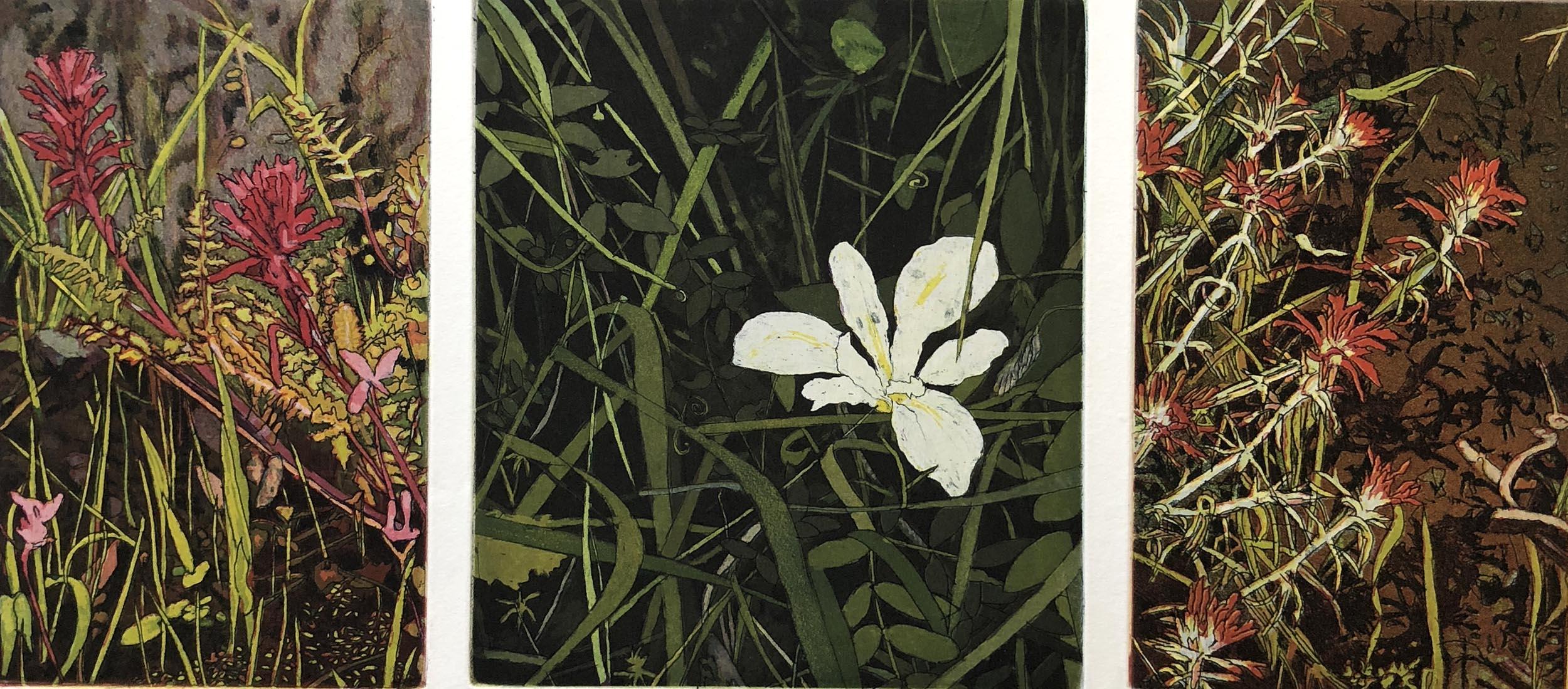 Marin Wildflowers